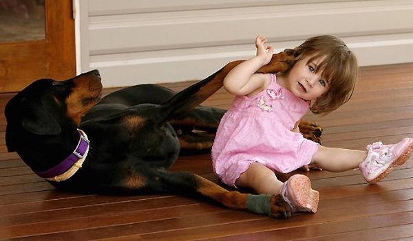 Малышка играла с доберманом, но вдруг, пёс оскалился на девочку, зарычал и схватил ее…