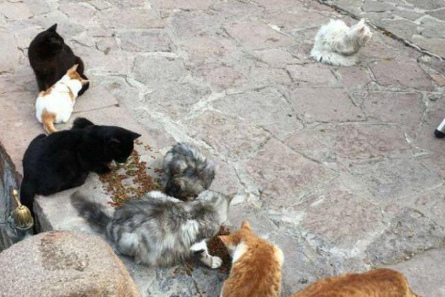 Потерявшийся кот вернулся в семью иракских беженцев, преодолев полмира за полтора месяца (10 фото)