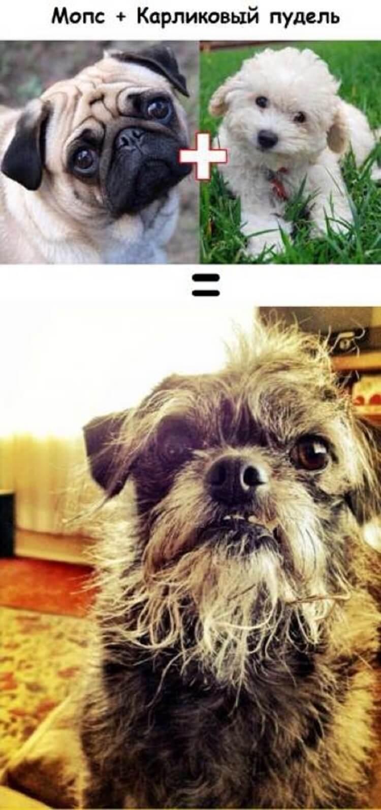 Вот к чему приводит любовь собак разных пород…
