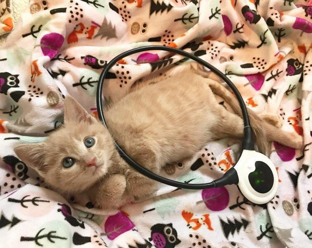 Парализованный котенок встретил своих самых лучших хозяев!