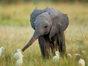 15 действительно странных примеров дружбы среди животных, которые удалось поймать на камеру.