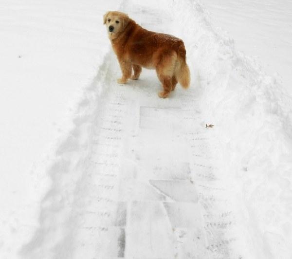 Старенькая собака с трудом поднималась. Но когда увидела хозяйку случилось чудо.
