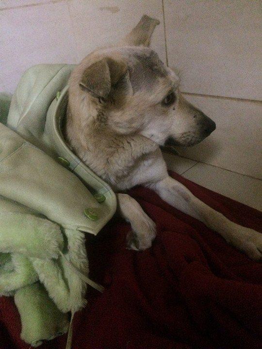 Раненая собака тихо умирала в парке…Люди шли мимо, но внезапно кто-то остановился рядом…