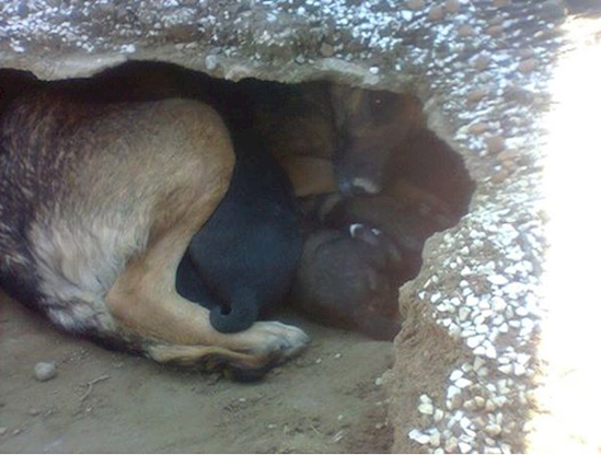 Эта собака осталась преданной своему хозяину, даже после его смерти! Когда волонтер пришел ее забрать, то увидел это..
