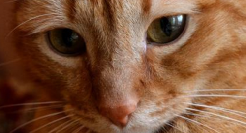 Трогательная история о коте и его преданности…До слез!