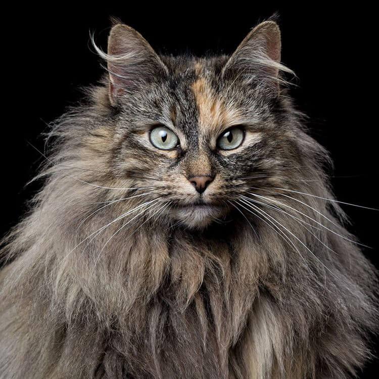 Фотограф снимает примечательные портреты котов, подчеркивающие их личность