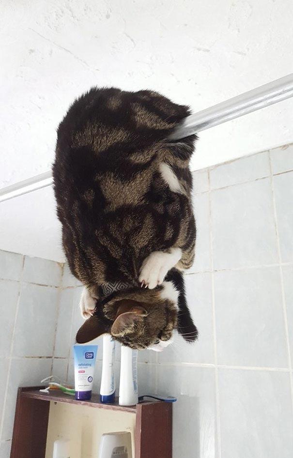 25 котов-идиотов, которые заставят вас громко смеяться
