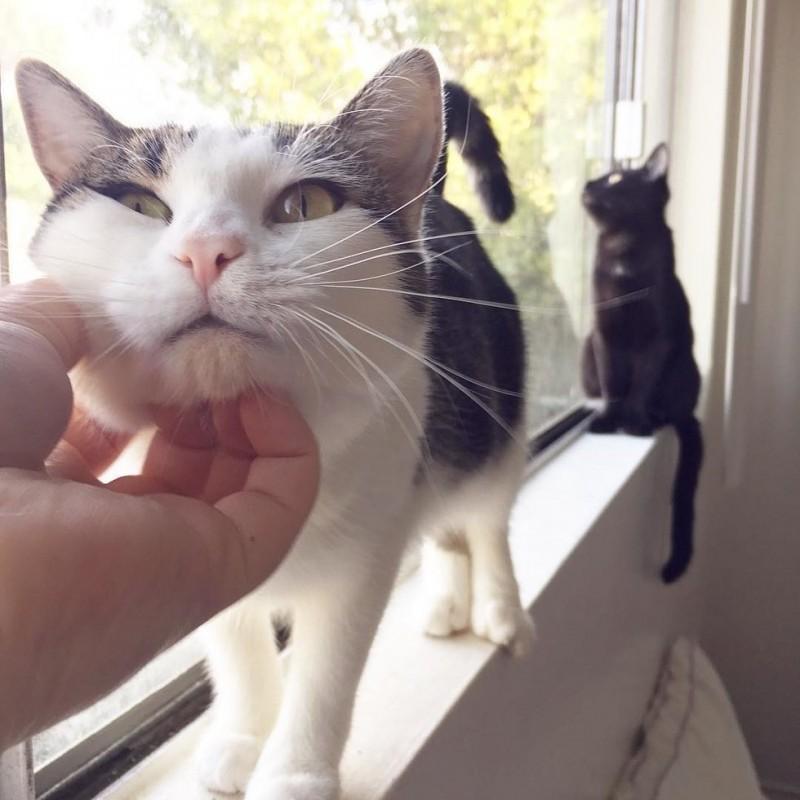 Однажды наша кошка притащила в дом маленьких котят, соседская кошка их бросила, а наша забрала…