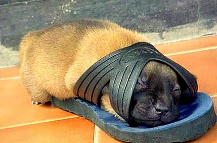25 милейших щенков, готовых спать при любых обстоятельствах