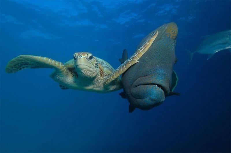 Самые смешные снимки дикой природы. Это нечто!