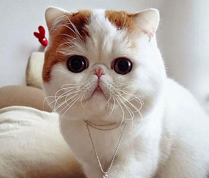 Порода кошек, подходящая вам по знаку Зодиака
