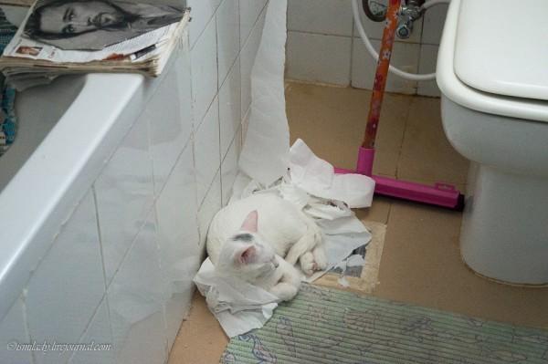 Туалетные разбойники, хроники преступлений =)