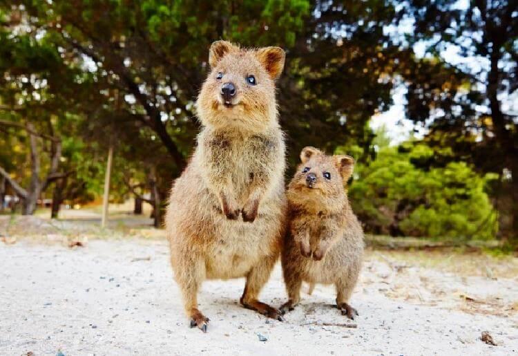 19 фото, которые доказывают, что в Австралии не все так радужно
