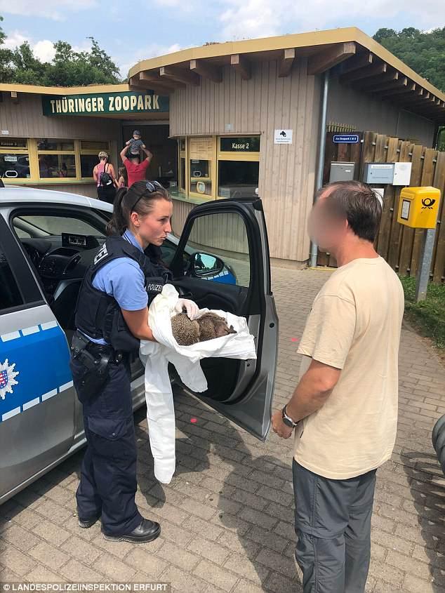 Как в Германии спасали ежей, которые нализались ликера до состояния «нестояния»