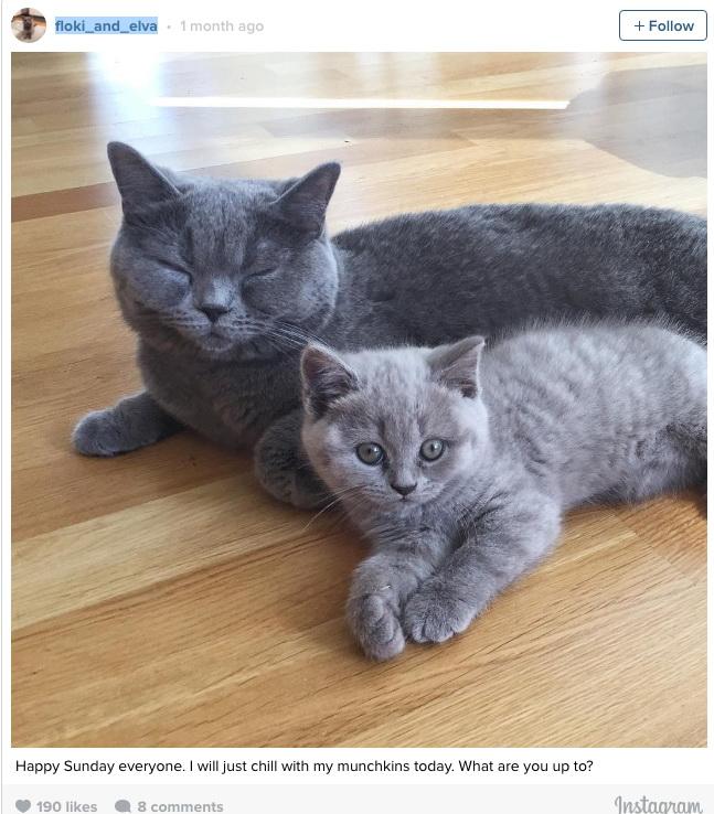 Взгляните на эти снимки и вы никогда не захотите заводить кота
