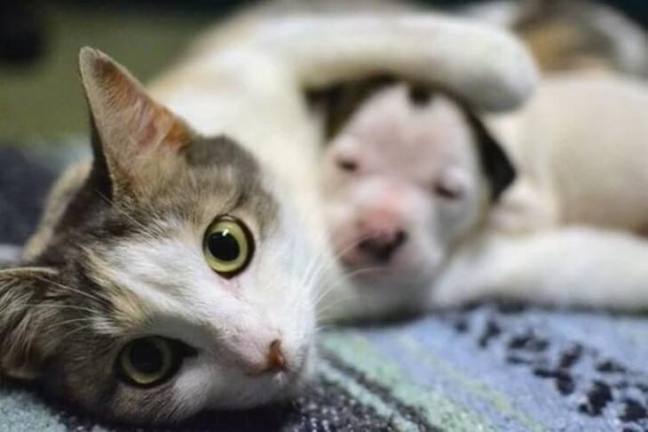 Как наша кошка подобрала брошенных котят и принесла домой