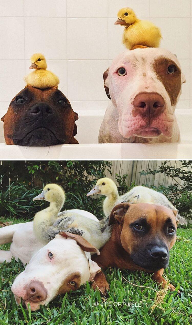 20 фотографий выросших вместе животных-друзей в стиле «тогда» и «сейчас»