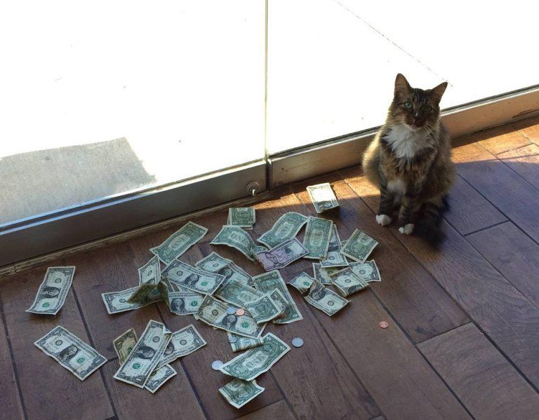 Сотрудники фирмы каждый день видели, что их кот носит наличку, но не могли понять где он ее берет