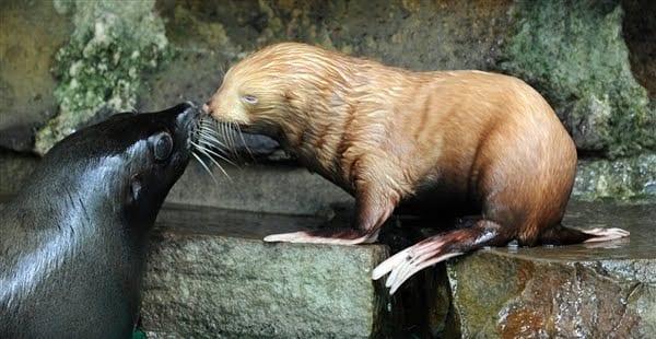 35 редких животных-альбиносов, которые покорят ваше сердце