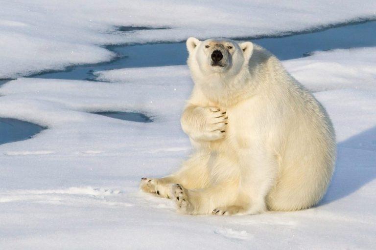 15 животных, которые себе на уме