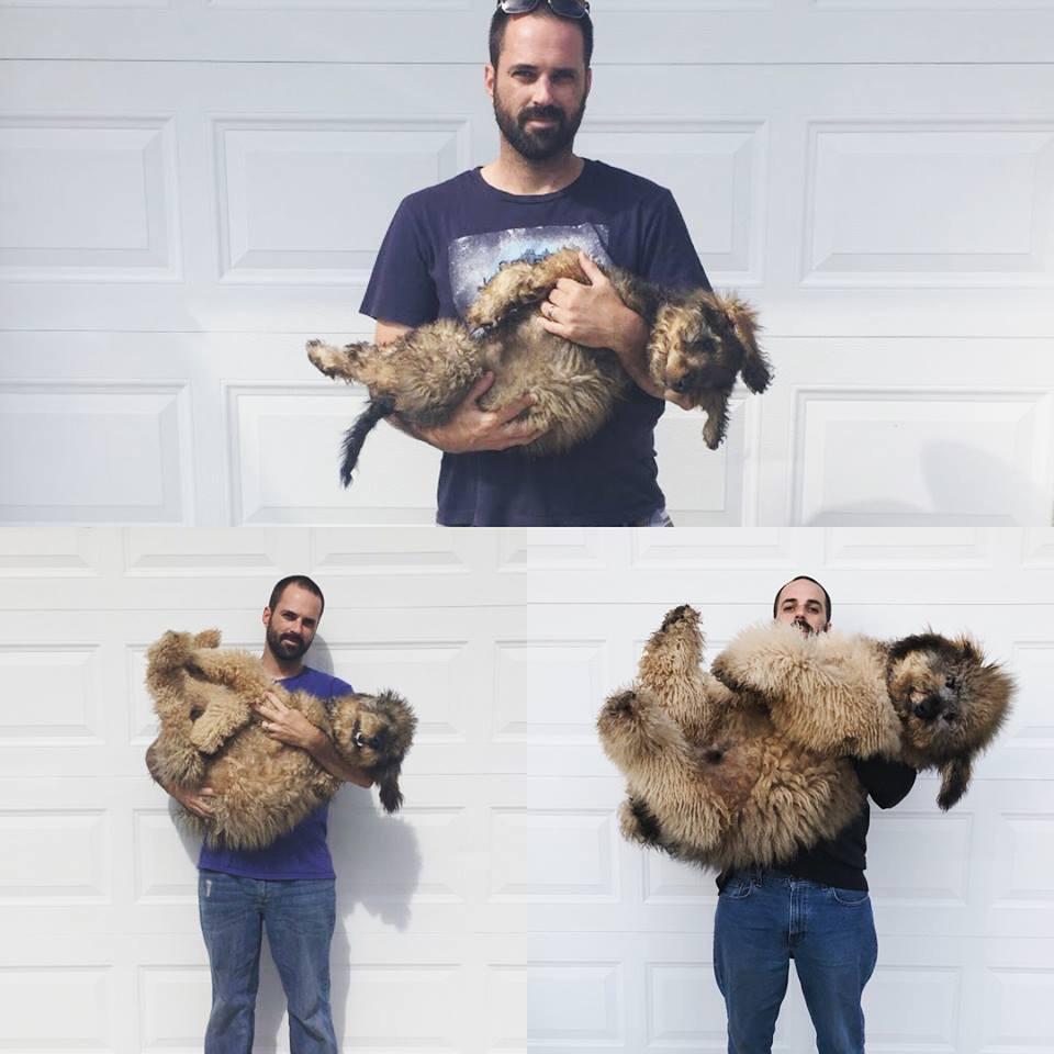 17 собак, которые выросли и стали больше хозяев, но в душе остались слюнявыми щеночками!
