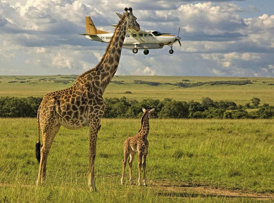Эти комедийные фото животного мира, сделают вам смешно