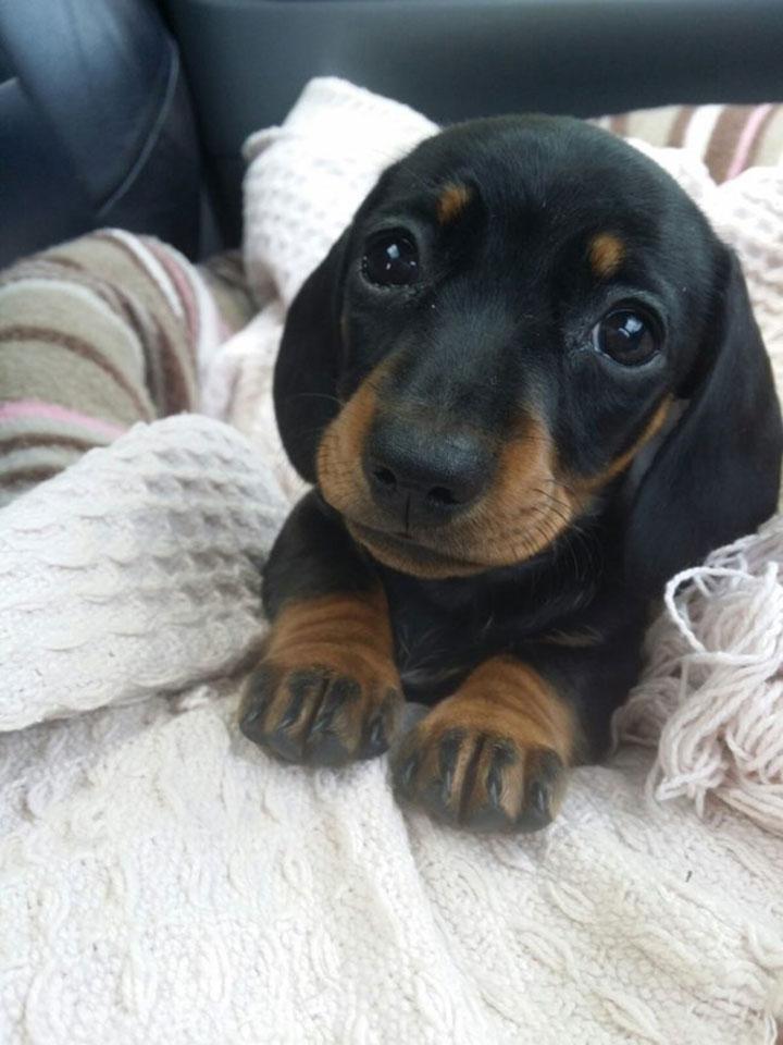 18 очаровательных щенков, которые заставят сердце каждого растаять от умиления